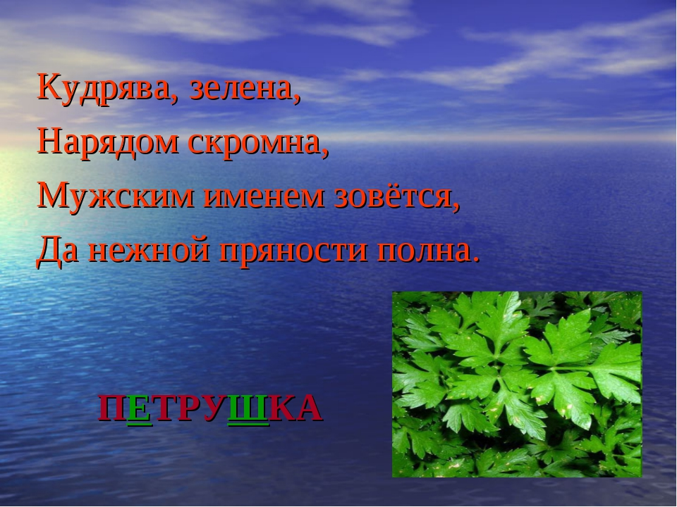 ПЕТРУШКА Кудрява, зелена, Нарядом скромна, Мужским именем зовётся, Да нежной...