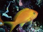 Животные - Морские жители - Рыбка
