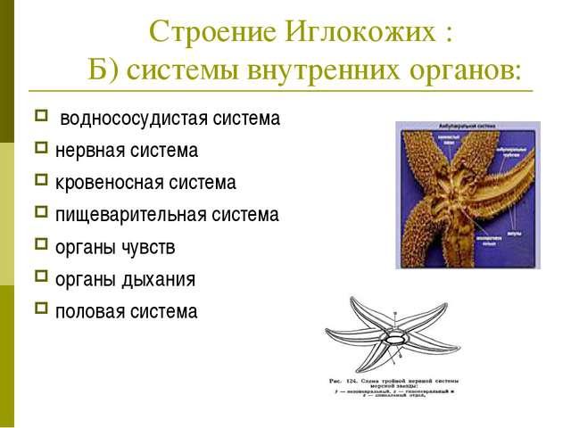 Строение Иглокожих : Б) системы внутренних органов: воднососудистая система...