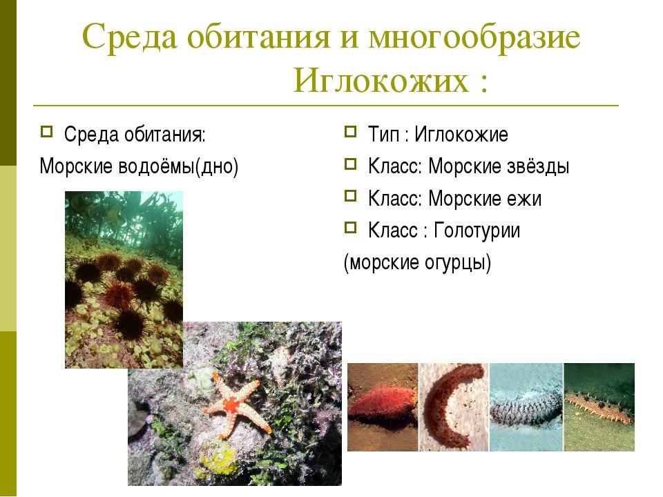 Среда обитания и многообразие Иглокожих : Среда обитания: Морские водоёмы(дно...