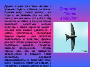 Другие птицы способны летать и плавать, ходить и бегать по земле. Стрижи могу