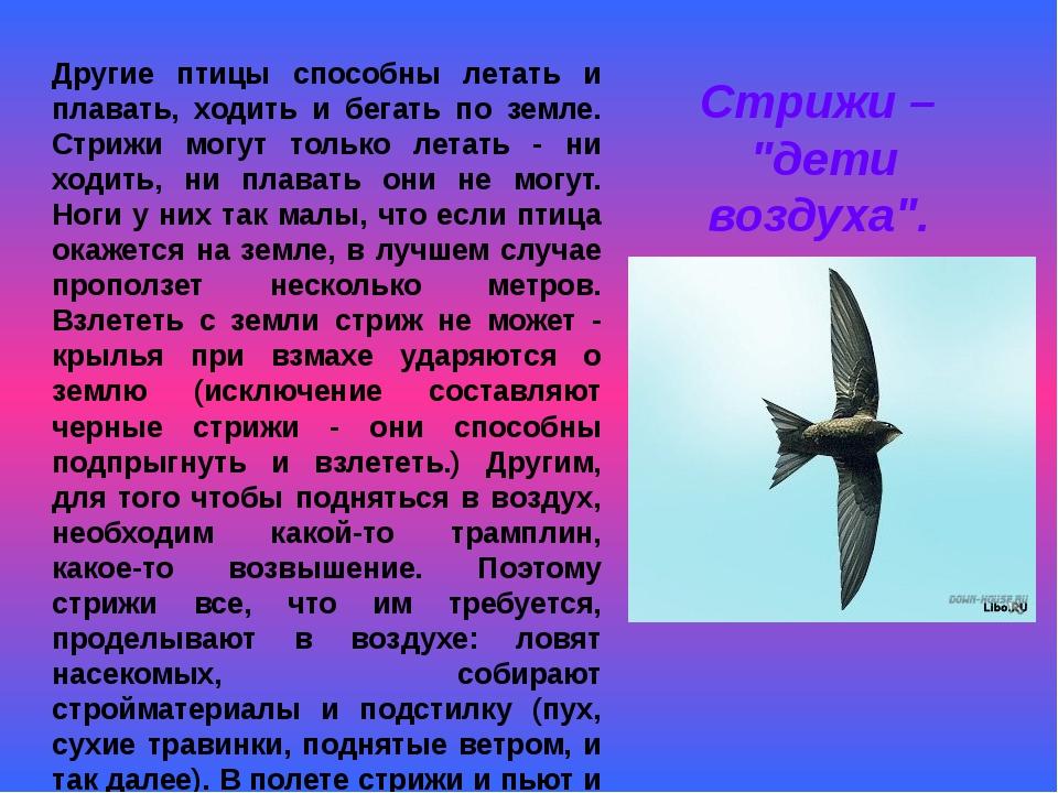 Другие птицы способны летать и плавать, ходить и бегать по земле. Стрижи могу...