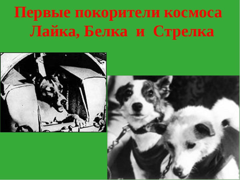 Первые покорители космоса Лайка, Белка и Стрелка