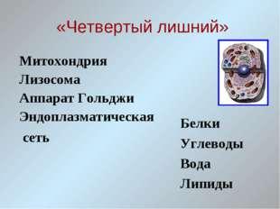 «Четвертый лишний» Митохондрия Лизосома Аппарат Гольджи Эндоплазматическая с