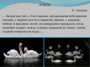 ЛЕБЕДЬ С. Аксаков … Белый как снег, с блестящими, прозрачными небольшими глаз