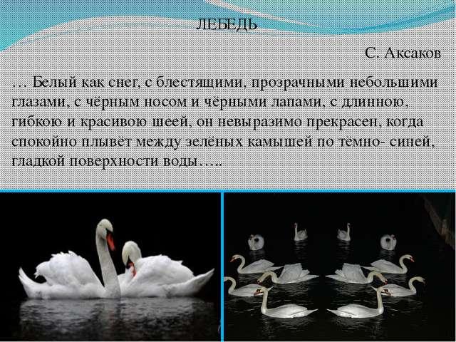 ЛЕБЕДЬ С. Аксаков … Белый как снег, с блестящими, прозрачными небольшими глаз...