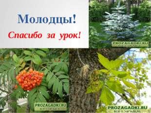Познаю окружающий мир «Дерево» _______________________________  Запиши леген