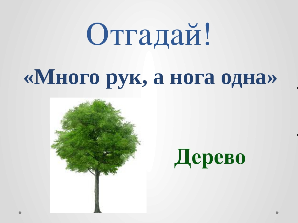 Почему деревья – «лёгкие» планеты? Почему деревья – украшения пла...