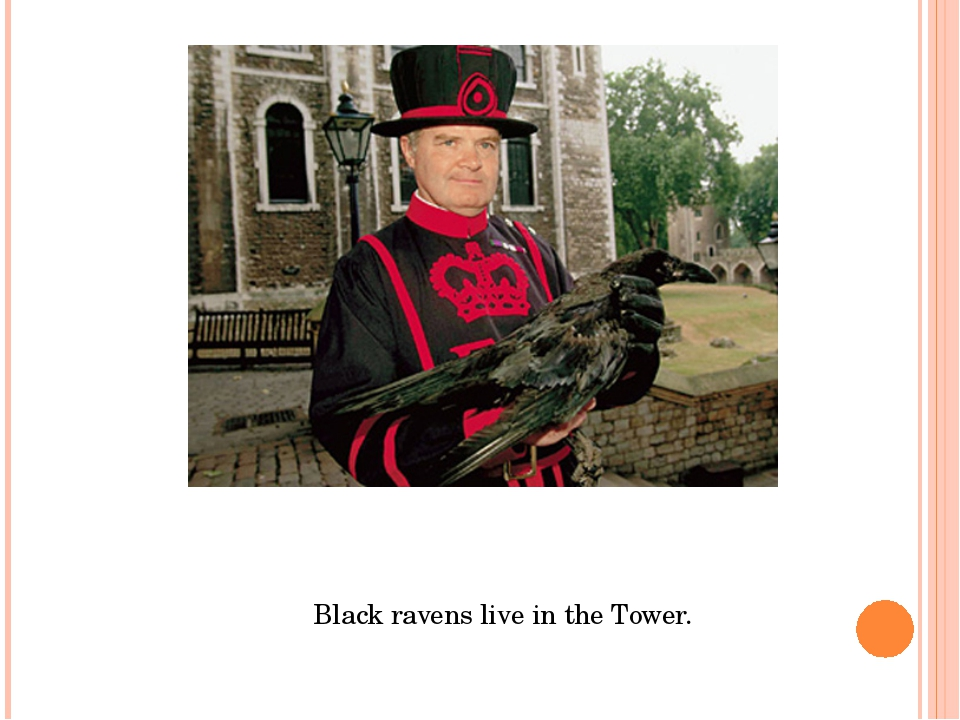 Black ravens live in the Tower.