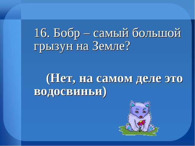 16. Бобр – самый большой грызун на Земле? (Нет, на самом деле это водосвин...