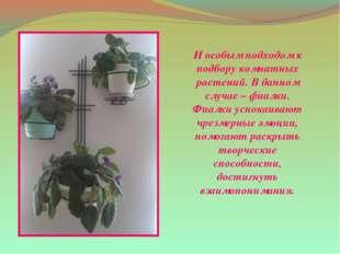И особым подходом к подбору комнатных растений. В данном случае – фиалки. Фиа