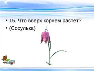 15. Что вверх корнем растет? (Сосулька)