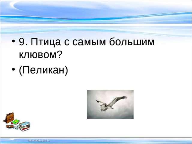 9. Птица с самым большим клювом? (Пеликан)