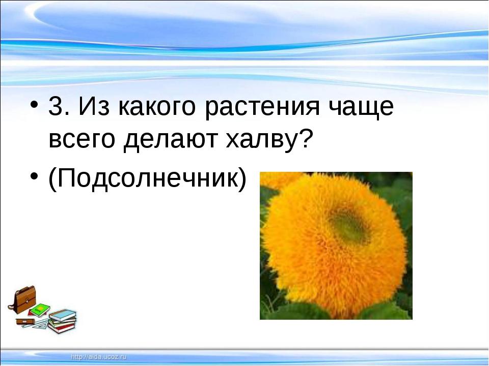 3. Из какого растения чаще всего делают халву? (Подсолнечник)