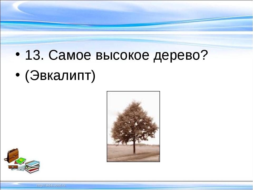 13. Самое высокое дерево? (Эвкалипт)