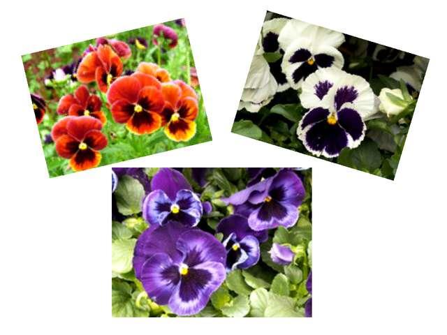 Полюбуйтесь разнообразием расцветок и оттенков.