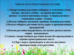 ПАМЯТКА СБОРА ЛЕКАРСТВЕННЫХ РАСТЕНИЙ. 1.Лекарственные растения собирают в сол