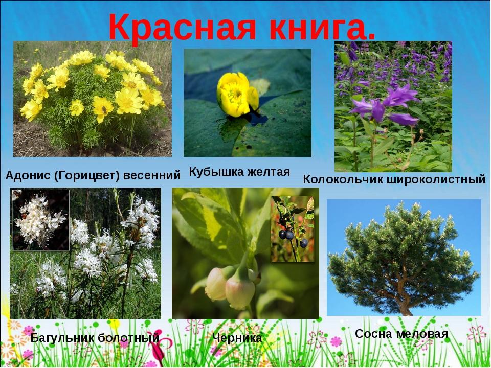 Растения красной книги с картинками и названиями
