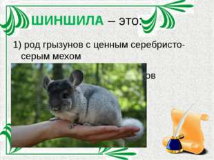 ШИНШИЛА – это: 1) род грызунов с ценным серебристо-серым мехом 2) сгущённый с
