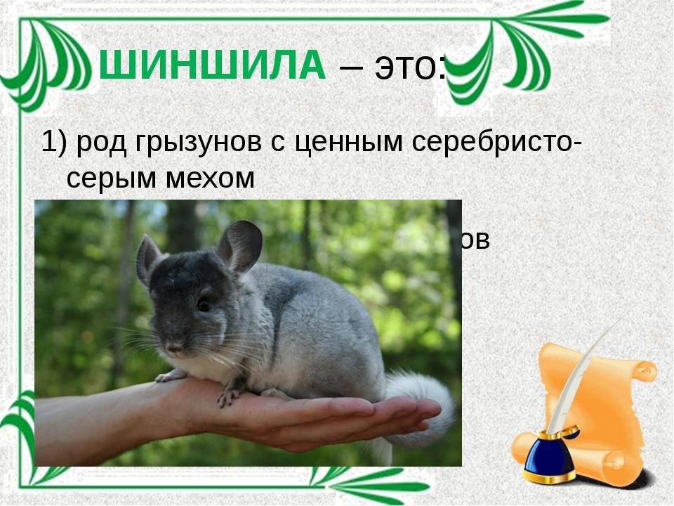 ШИНШИЛА – это: 1) род грызунов с ценным серебристо-серым мехом 2) сгущённый с...