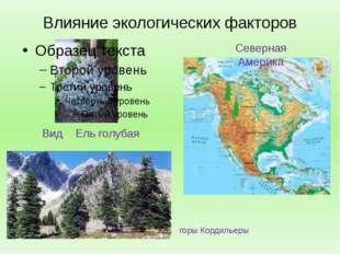 Влияние экологических факторов Вид Ель голубая Северная Америка горы Кордильеры