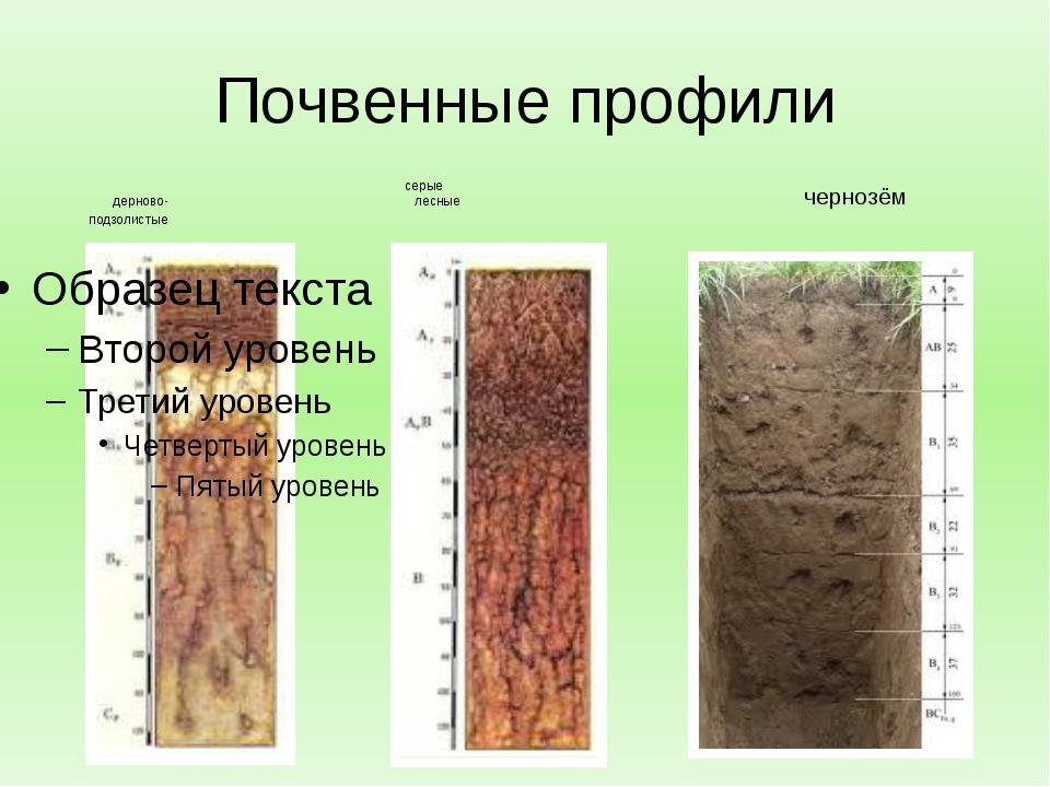Почвенные профили серые дерново- лесные подзолистые чернозём
