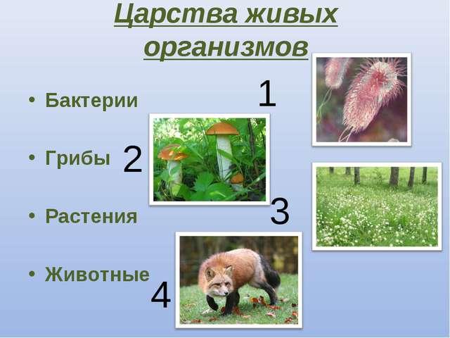 Царства живых организмов Бактерии Грибы Растения Животные 1 2 3 4