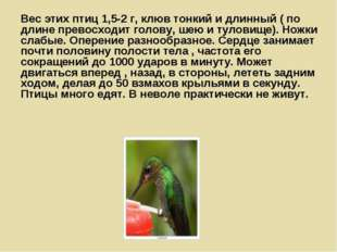 Вес этих птиц 1,5-2 г, клюв тонкий и длинный ( по длине превосходит голову, ш