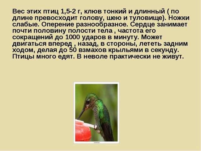 Вес этих птиц 1,5-2 г, клюв тонкий и длинный ( по длине превосходит голову, ш...