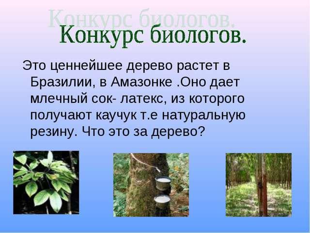 Это ценнейшее дерево растет в Бразилии, в Амазонке .Оно дает млечный сок- ла...