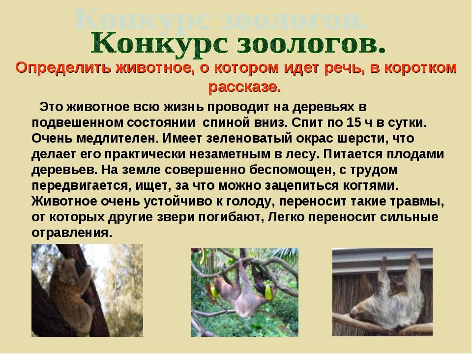 Определить животное, о котором идет речь, в коротком рассказе. Это животное в...