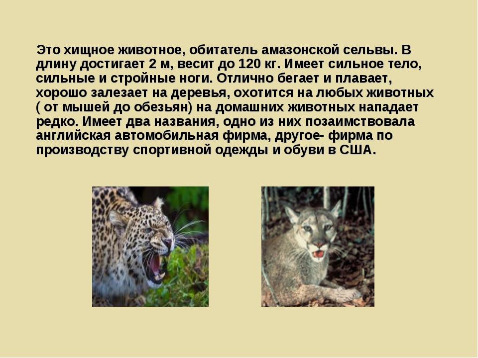 Это хищное животное, обитатель амазонской сельвы. В длину достигает 2 м, вес...