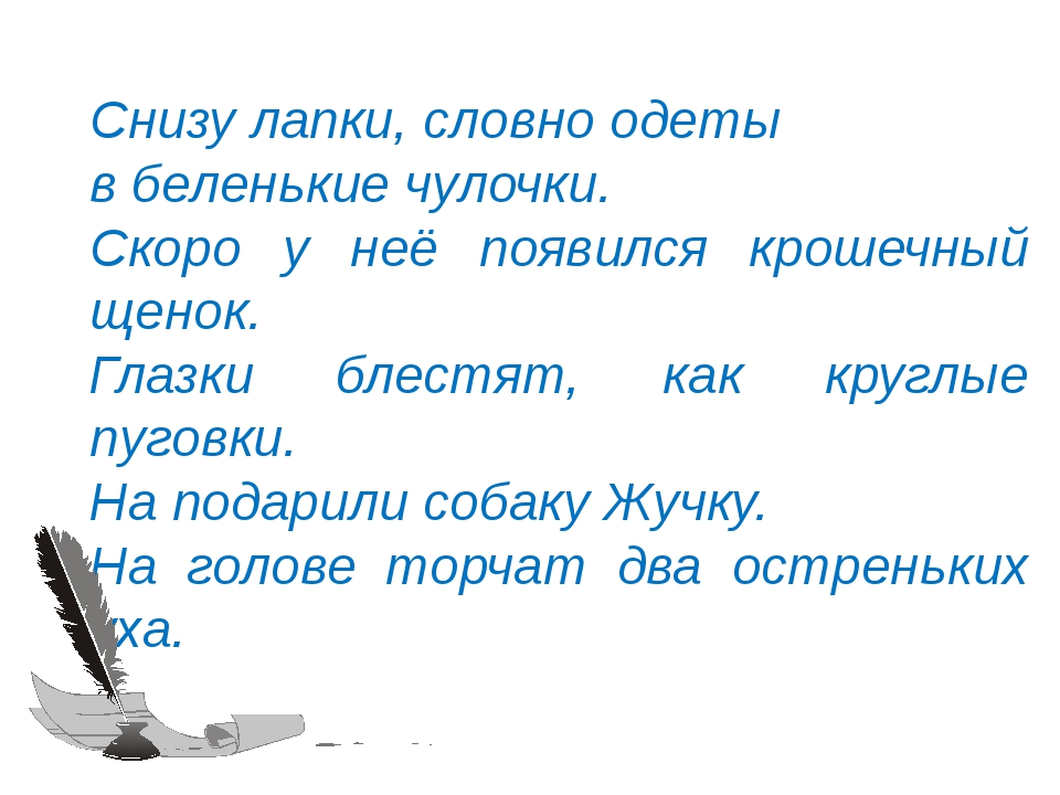 © InfoUrok.ru Снизу лапки, словно одеты в беленькие чулочки. Скоро у неё появ...
