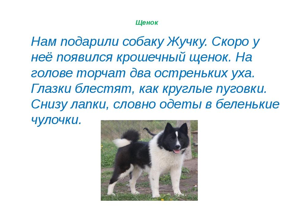 © InfoUrok.ru Нам подарили собаку Жучку. Скоро у неё появился крошечный щенок...