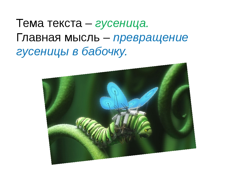 © InfoUrok.ru Тема текста – гусеница. Главная мысль – превращение гусеницы в...