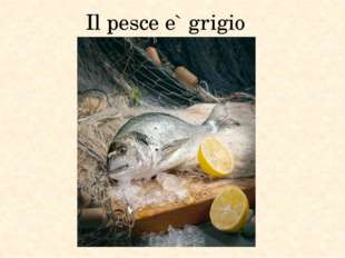 Il pesce e` grigio