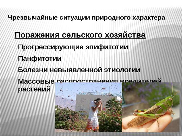 Чрезвычайные ситуации природного характера Поражения сельского хозяйства Прог...