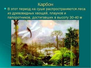 Карбон В этот период на суше распространяются леса из древовидных хвощей, пла