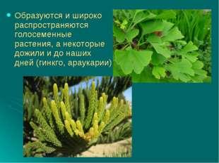 Образуются и широко распространяются голосеменные растения, а некоторые дожил