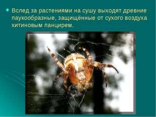 Вслед за растениями на сушу выходят древние паукообразные, защищённые от сухо