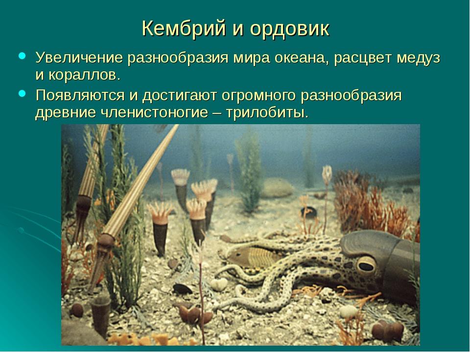 Кембрий и ордовик Увеличение разнообразия мира океана, расцвет медуз и коралл...