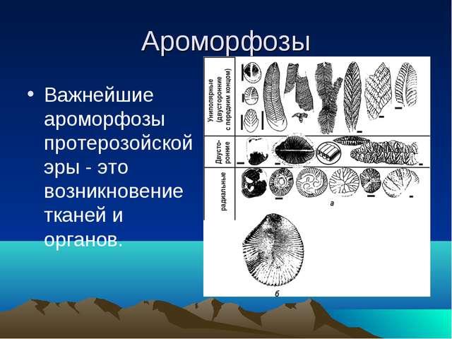 Ароморфозы Важнейшие ароморфозы протерозойской эры - это возникновение тканей...