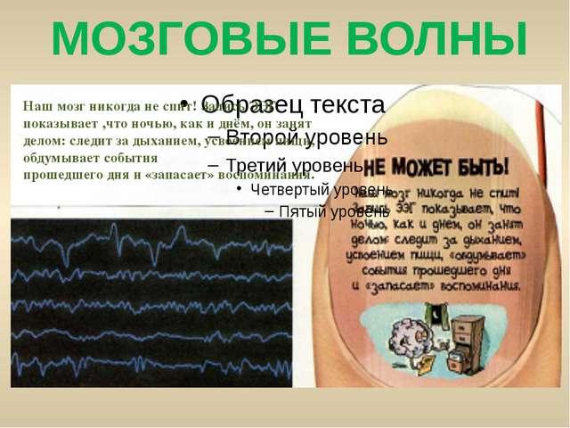 МОЗГОВЫЕ ВОЛНЫ Наш мозг никогда не спит! Запись ЭЭГ показывает ,что ночью, ка...