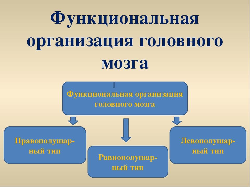 Функциональная организация головного мозга Функциональная организация головно...