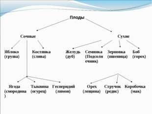 Плоды Сочные Сухие Ягода (смородина)Тыквина (огурец)Гесперидий (лимон)