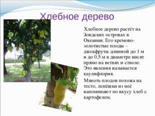Хлебное дерево Хлебное дерево растёт на Зондских островах в Океании. Его крем