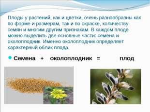 Плоды у растений, как и цветки, очень разнообразны как по форме и размерам, т