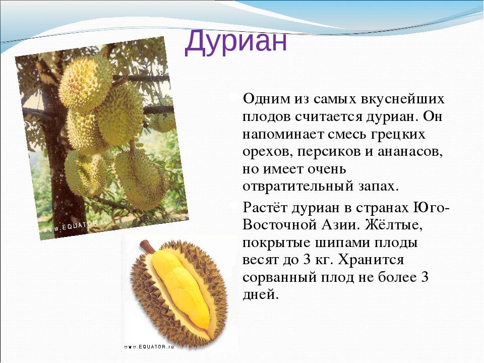 Дуриан Одним из самых вкуснейших плодов считается дуриан. Он напоминает смесь...