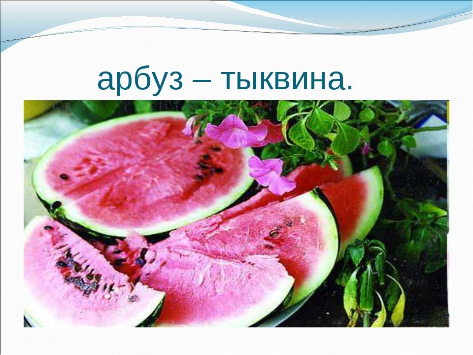 арбуз – тыквина.