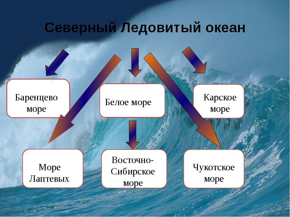 Северный Ледовитый океан Баренцево море Белое море Карское море Море Лаптевых...